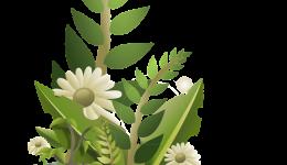 flower-34592_1280